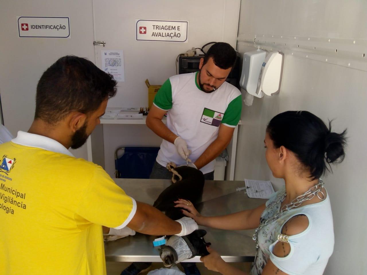 Programa de Castração de Cães volta à Rodeiro